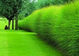 osnovnye-preimushhestva-dekorativnoj-travy