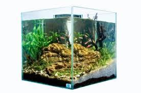 chto-uchest-pri-vybore-filtra-dlya-akvariuma-s-krevetkami